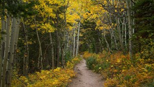 path into aspen grove in fall colors