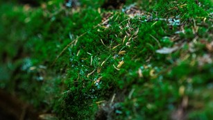 close-up of a moss covered log