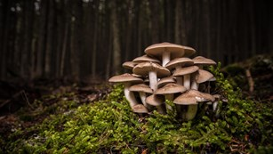 bunch of mushrooms in a forest
