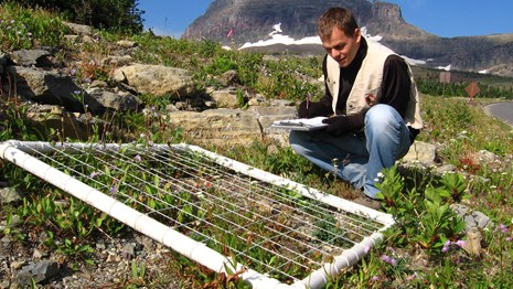 researcher uses measuring tape and grid on alpine rocks