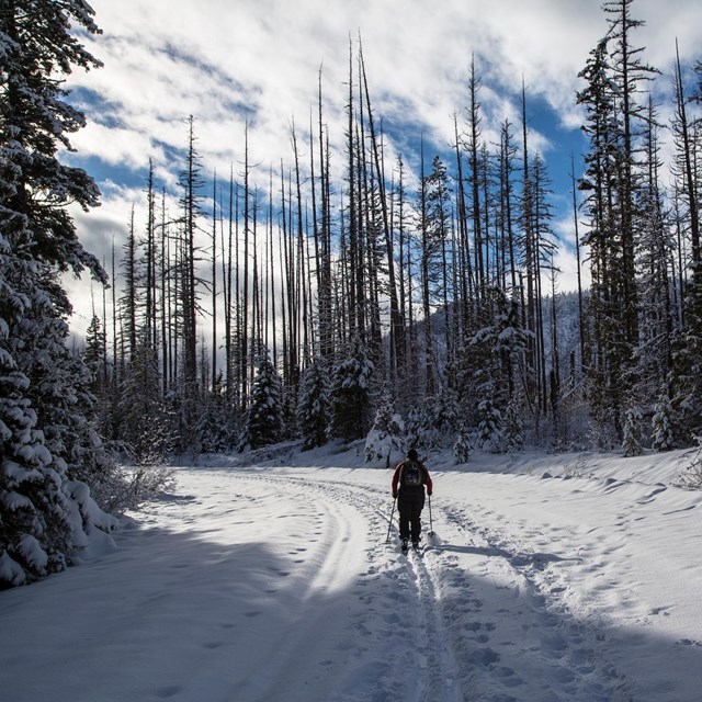 Visitor skiing the road to Fish Creek