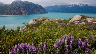 What Makes Glacier Bay Special?