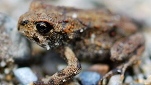 a small toad sits on rocks