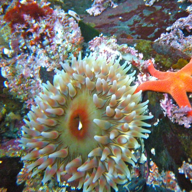 a brightly colored anemone and starfish