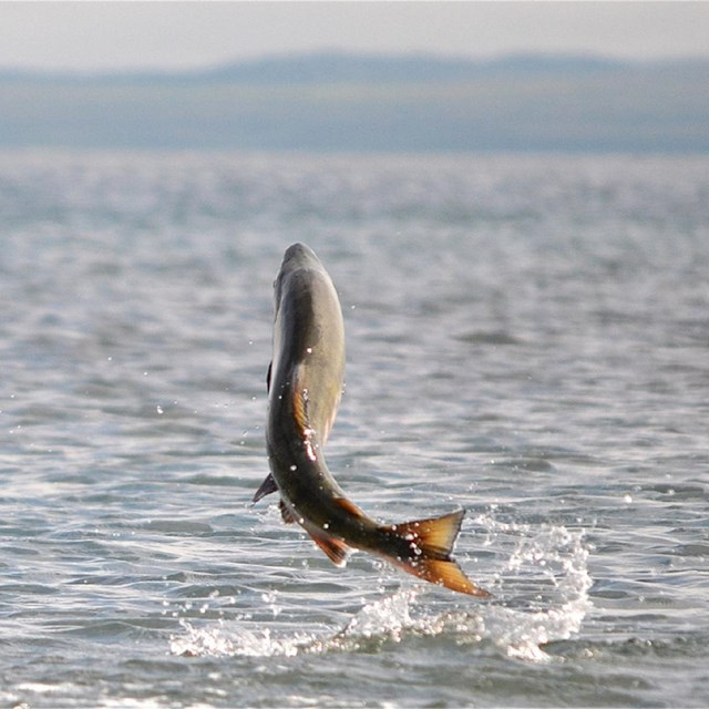 a fish jumping out from the ocean