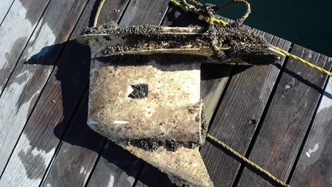 Mussel encrusted anchor lays on dock