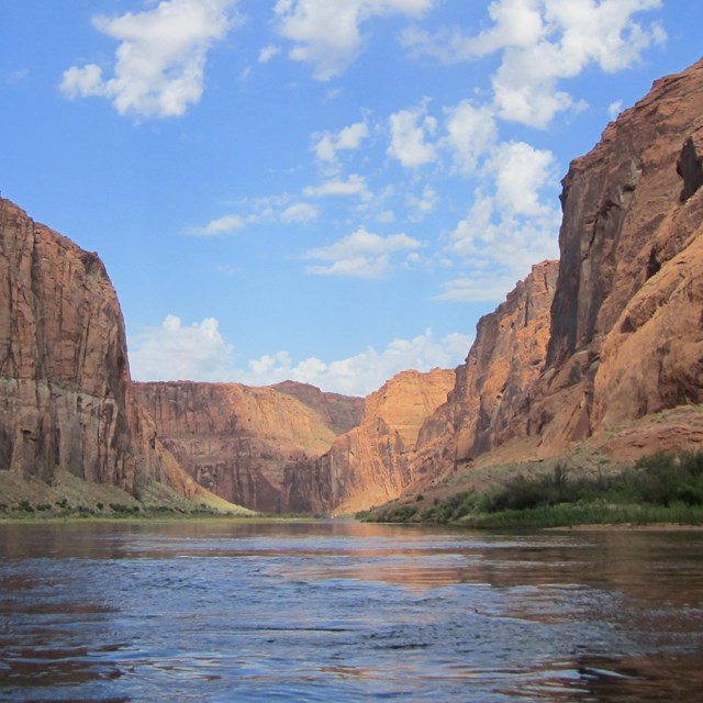 Placid Colorado River lined by shoreline vegetation and towering sandstone canyon walls