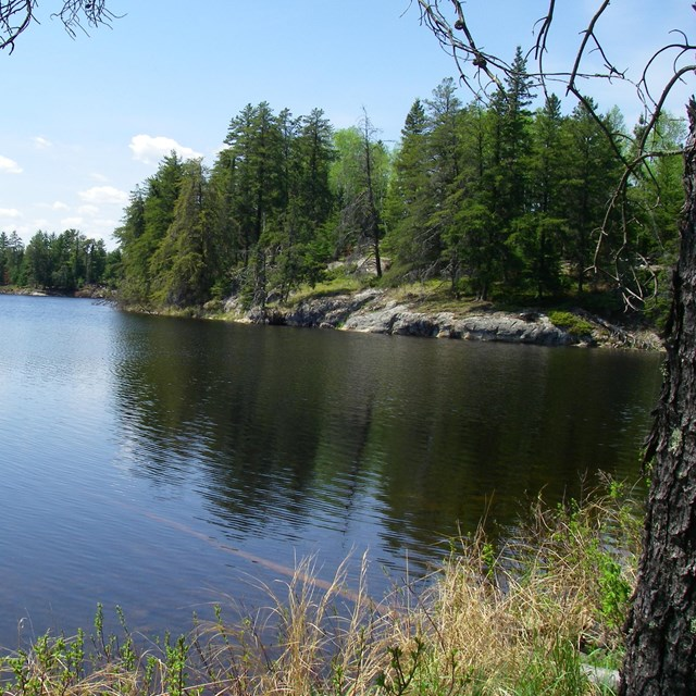 Forested shoreline of Peary Lake