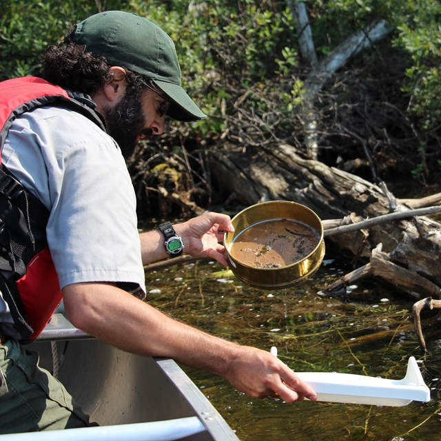 Biologist runs lake water through a sieve.