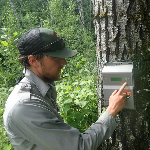 Technician checks a bat recorder