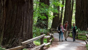three women walk along a winding, tree lined trail in Muir Woods