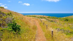 grassy trail along ocean coastline