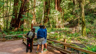 Two individuals stand along a trail looking at a trail kiosk. Redwood trees tower overhead.