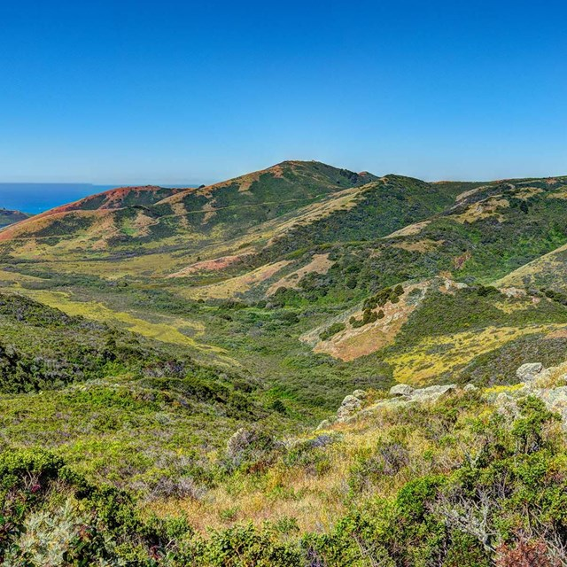 Landscape image of scrubland habitat in the Marin Headlands