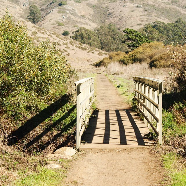 Trail path at Tennessee Valley