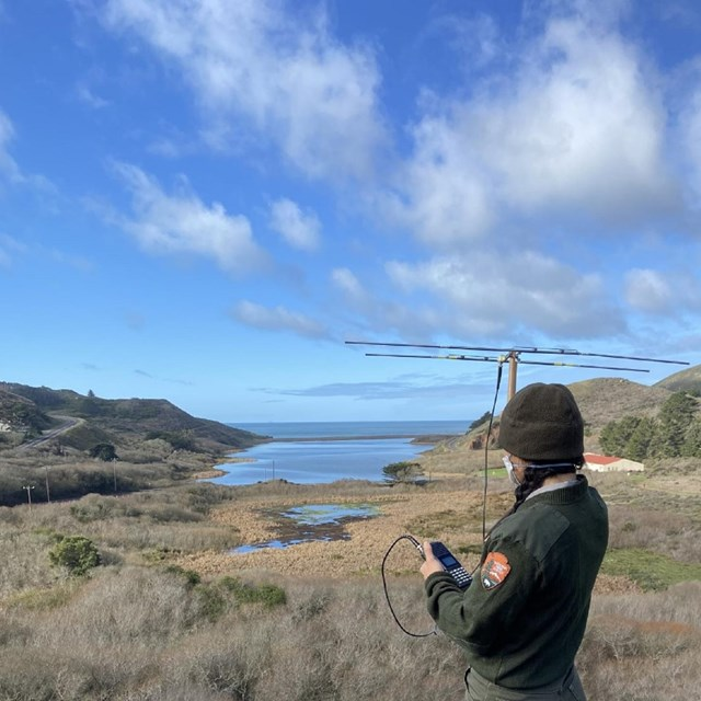A ranger holds a yaagi, a type of telemetry equipment used to GPS track animals, at Rodeo Lagoon.