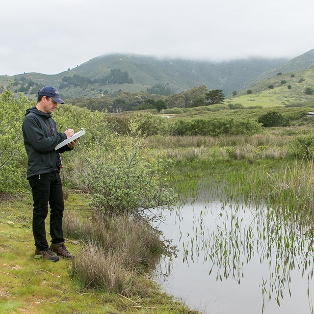 Researcher takes measurements in a wetland habitat.