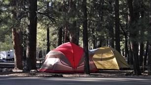 Two tents, one red and on yellow in a campsite under tall pine trees.