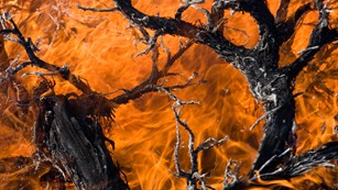 Branches burn, with orange flame filling the image.