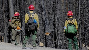 Fire fighters cut down burned trees