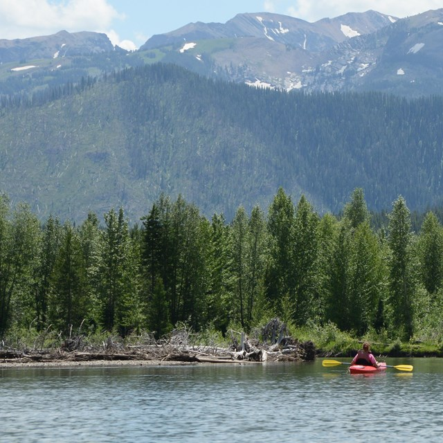 kayaker gazing up at forest and mountains