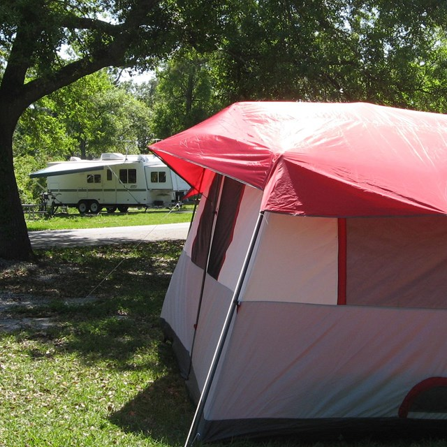 A tent with a red rain fly is pitched beneath a shady tree.