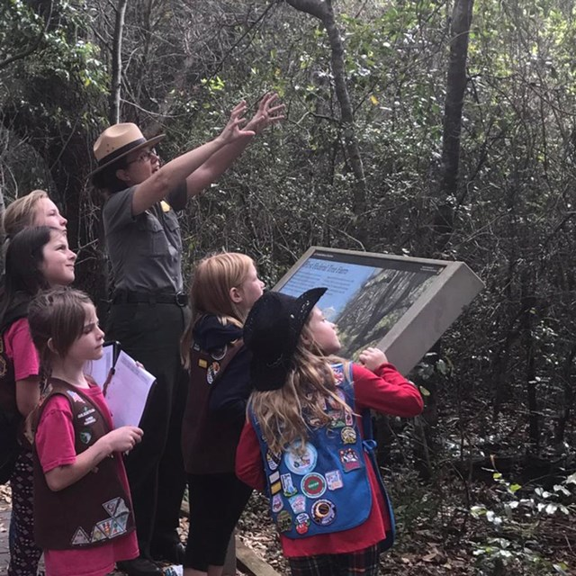 A group of girls scouts gather around a ranger along a wooden trail, all are looking up at the trees