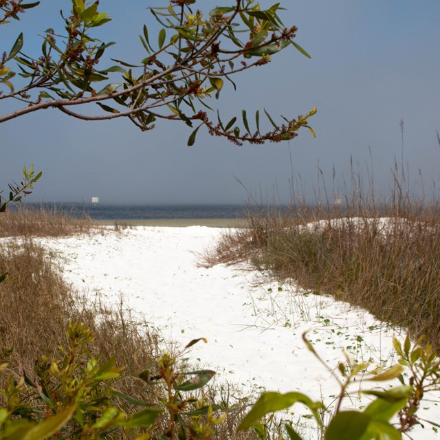 A green tree branch frames a white sand path that leads to blue water in the background.