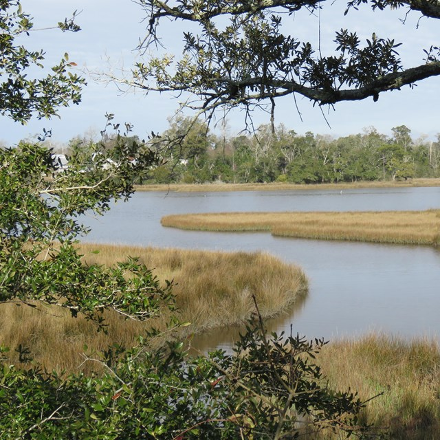 A bayou extents in the background through trees in the foreground.
