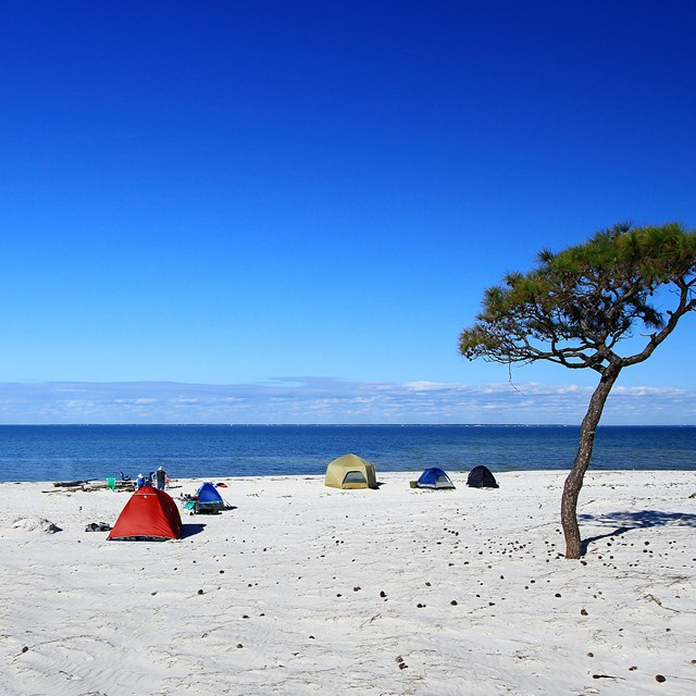 Tents set up along a white sand beach, a solitary tree stands near the tents.