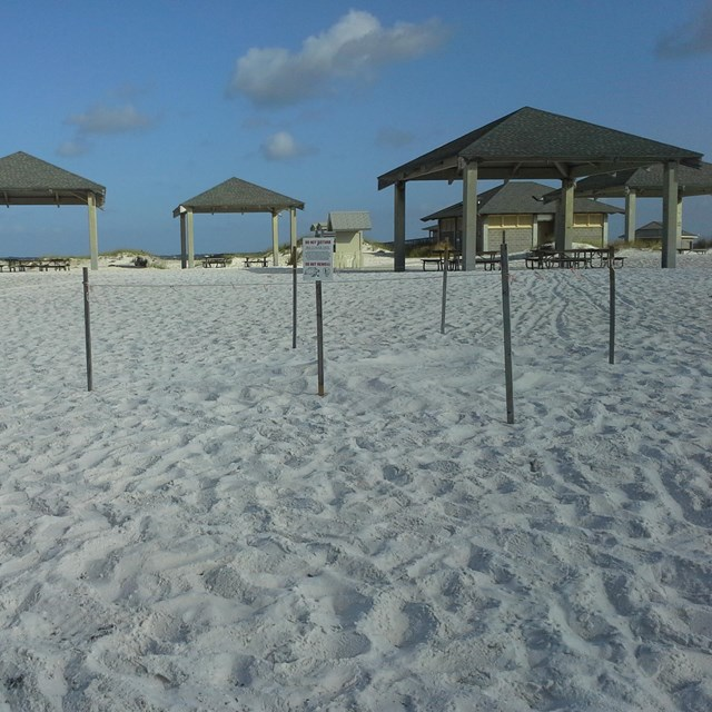 Picnic shelters stand on the edge of a white sand beach.