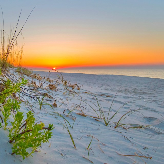 The sun sets of the Gulf of Mexico with a sandy beach and grass covered dunes in the foreground.