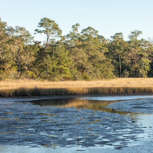 A bayou extents in the foreground to trees in the background.