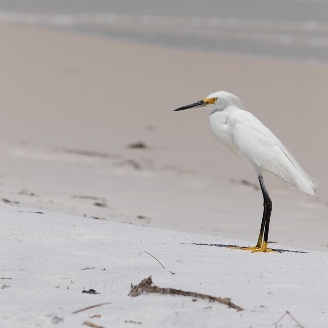 A white egret with black and yellow legs on a white sand beach.