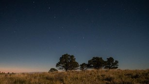 Trees in a twilight landscape with stars in the sky