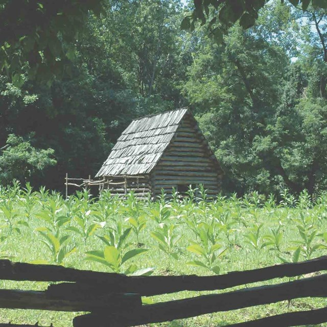 Image of a Colonial Tobacco Barn