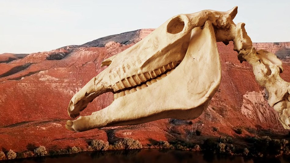 A fossil horse skull pasted onto a brown Hagerman landscape.