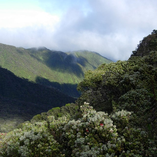 50 Years of Conservation in Kīpahulu Valley  & the Expedition that Started it All