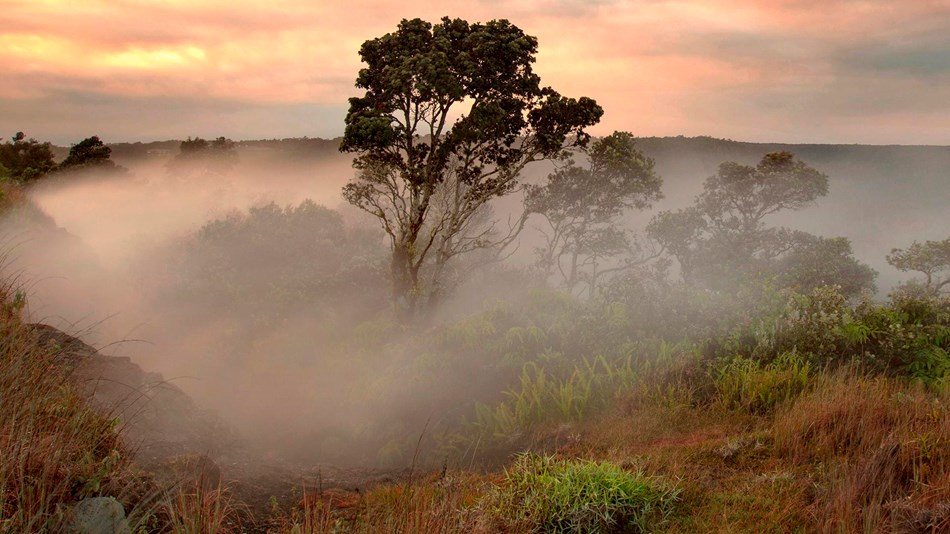 A tree surrounded by steam at sunrise
