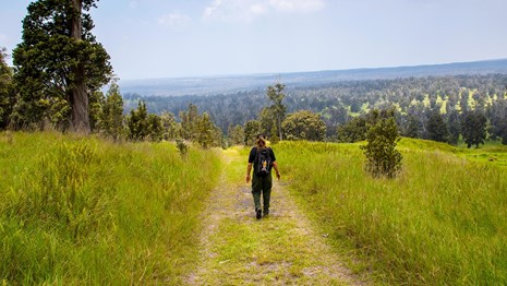 A hiker walks along a trail surrounded by green grass