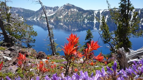 Purple and red flowers in front of mountains and Crater Lake
