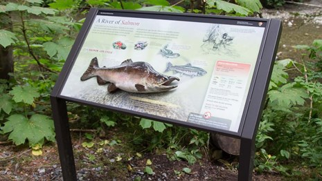 A wayside showing a tactile river salmon.