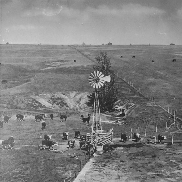 Windmill surrounded by cows