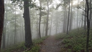 Fog fills the forest trail