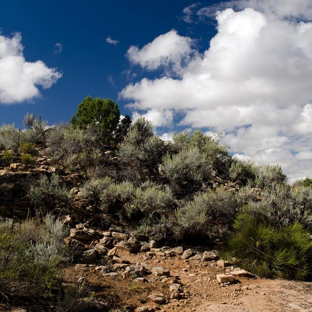 sagebrush and juniper with cloudy skies