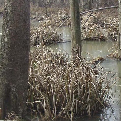 Photo of a wetland area at Cuyahoga Valley National Park
