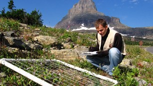 Field technician in Glacier National Park noting data from a transect set up on the ground