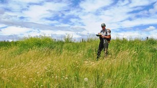 National Par Service scientist collecting data in a grassland habitat.