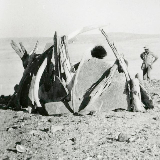 Woman posing in whalebone hut reconstructed from remains of shelter possibly built by the Lone Woman