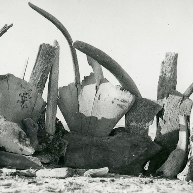 Whale bones stacked on a beach.